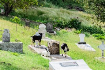 Alter Friedhof auf Mayreau