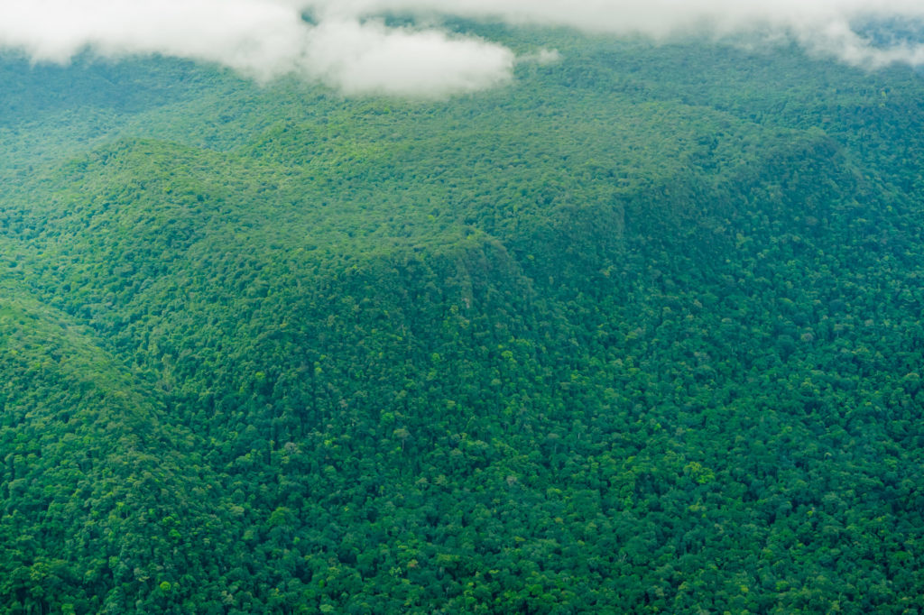 undurchdringlicher Regenwald im Kaieteur National Park