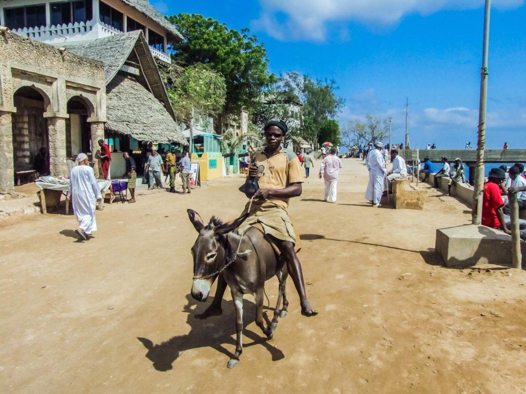 Esel auf Lamu - Kenia